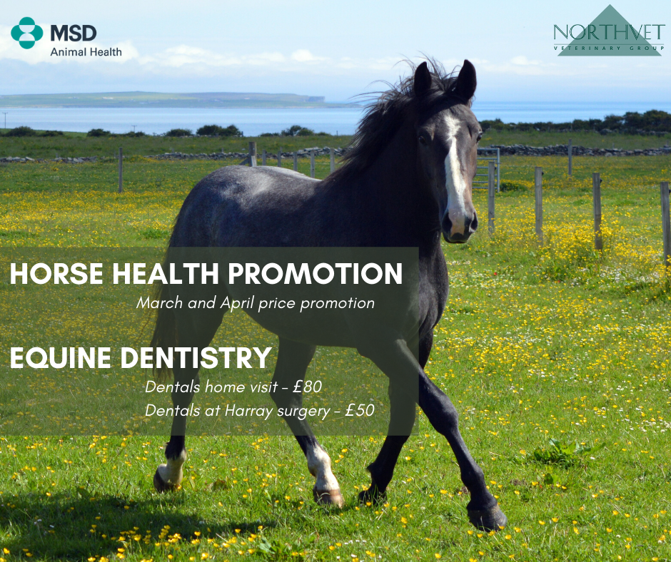 Horse Health Promotion