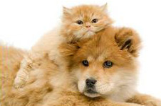 Cat and dog - Parasite Control