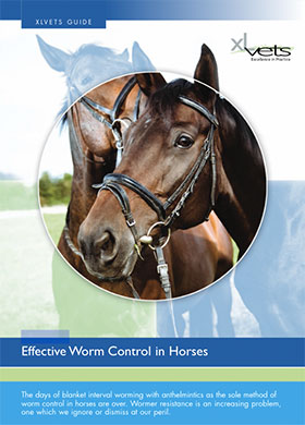 Worm Control In Horses